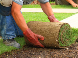 Turf Replacement Rebate